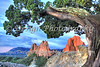 Garden of the Gods under a Juniper Tree, Colorado Springs, Colorado