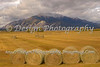 Harvest at Mount Princeton